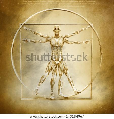 Anatomy of Vitruvian Man - stock photo