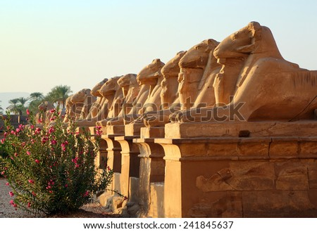 ancient egypt statues of sphinx in Luxor karnak temple at sunset - stock photo