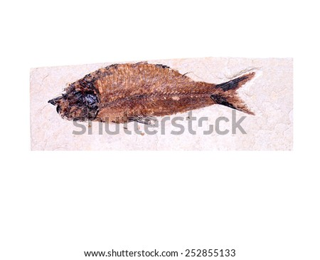 Ancient fish fossil in rock from 300 million years ago - stock photo
