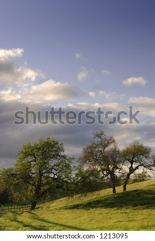 Ancient oak trees surrounded by a field of fresh spring grasses. - stock photo