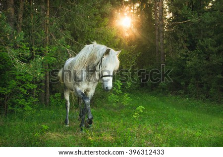 Andalusian stallion, a fantastic horse, horse, forest, tale, white, mane, sunlight in her hair, view from front, coming at you, strength, confidence. andalusia stallion - stock photo