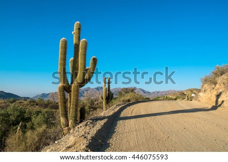 Andean dirt road in Salta province, Argentina, flanked by cardon cacti - stock photo