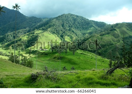 Andean valley and mountains. Cocora Valley, landscape of Quindio, between the mountains of the Cordillera Central in Colombia. Predominates wax palm, Colombia's national tree growing to 60 m. - stock photo