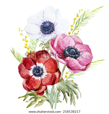 anemone, watercolor, flowers, flower, mimosa - stock photo