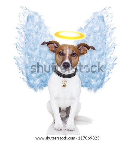angel dog feather wings aura nimbus - stock photo