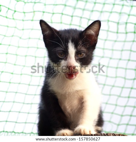 Angry cat ready to attack - stock photo