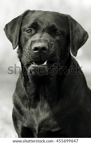 Growl Stock Photos, Images, & Pictures | Shutterstock
