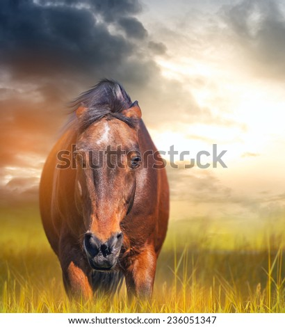 angry horse with ears laid back in a field at sunset  - stock photo
