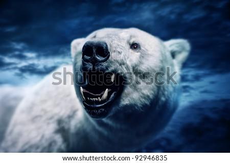 Angry polar bear with sharp teeth - stock photo