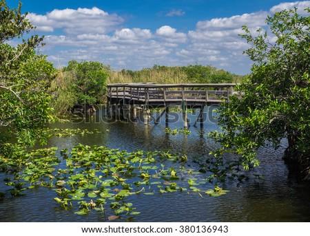 Anhinga Trail Boardwalk through the Everglades National Park, Florida - stock photo