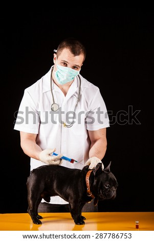 Animal doctor with french bulldog - stock photo