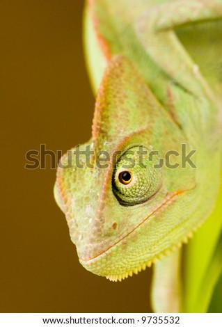 Animal Eye - stock photo