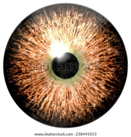 Animal eye with purple colored iris, detail view into eye bulb - stock photo