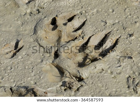Animal Footprints in Mud - stock photo