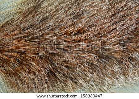 Animal fur close up - stock photo