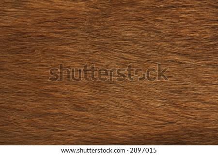 animal fur texture - stock photo