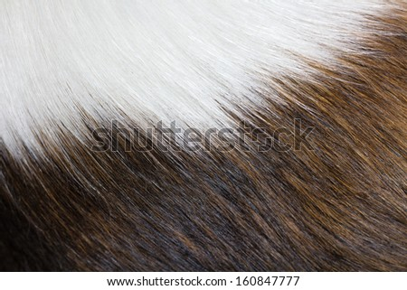 Animal hair. Combination of white, brown and black - stock photo