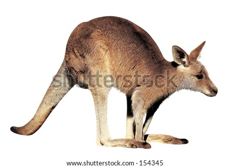 Animal Image  - stock photo