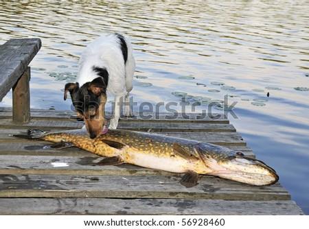 Animal instinct - stock photo