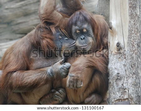 Animal love - stock photo