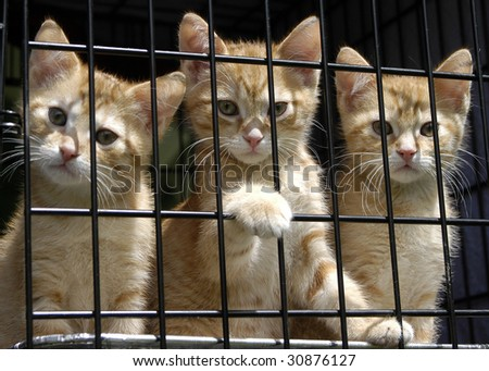 Animal Shelter Orphaned Pet - stock photo