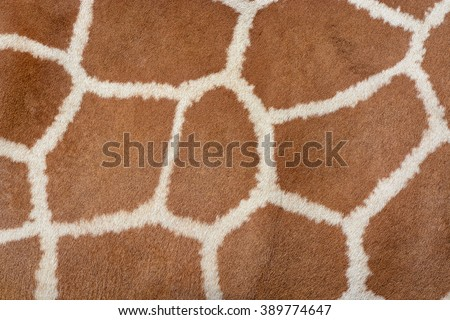 Animal skin background of the patterned fur texture on an African giraffe - stock photo