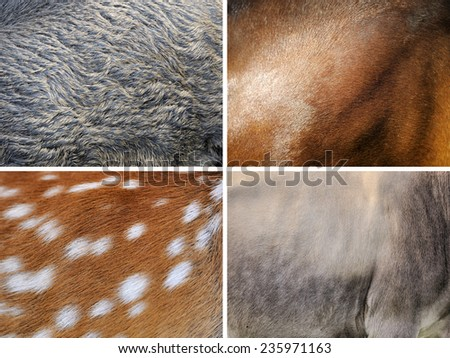 Animal skin texture (wild boar, horse, deer, cow) - stock photo