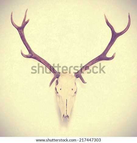 animal skull - stock photo
