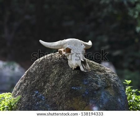 animal skull worn - stock photo