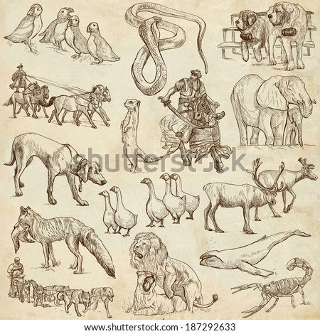 Animals around the world (collection no.6, old paper ) - Collection of an hand drawn illustrations. Description: Full sized hand drawn illustrations drawing on old paper. - stock photo