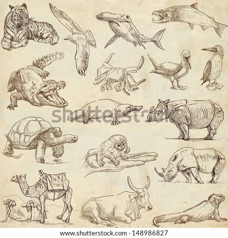 Animals around the world (collection no.3, paper) - Collection of an hand drawn illustrations. Description: Full sized hand drawn illustrations drawing on old paper. - stock photo