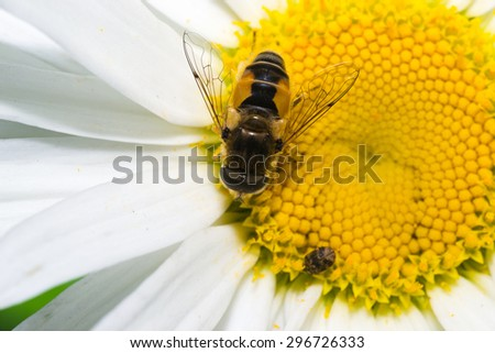 animals bee insect animal pets insects macro white - stock photo
