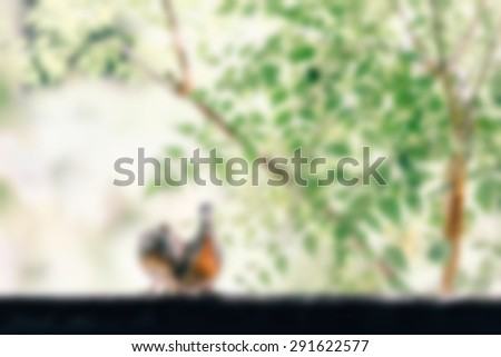animals in love blurred background - stock photo