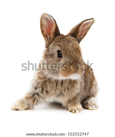 Animals. Rabbit isolated on a white background  - stock photo