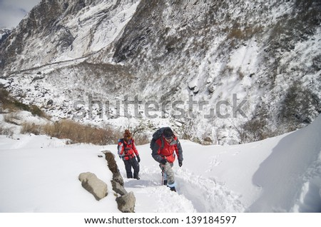 ANNAPURNA, NEPAL - FEBRUARY 5 : Unidentified mountaineers trekking to top of Annapurna base camp in Annapurna, Nepal February 5, 2012. Annapurna trail is well known for its trekking activities. - stock photo