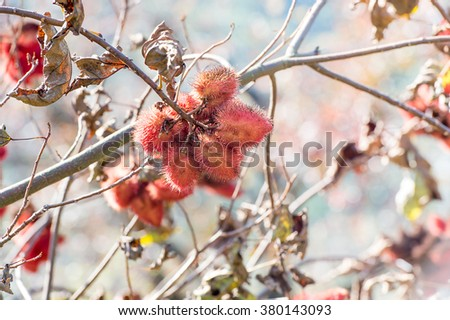 annatto tree - stock photo
