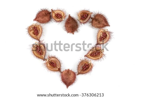 Annatto tree (Bixa orellana L.) of Thailand medicinal properties of the drug.