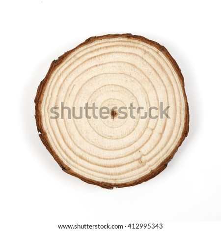 annual ring  - stock photo