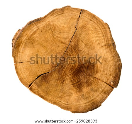 Annual tree growth rings of the cross-section of a tree trunk isolated on white. Overhead view - stock photo