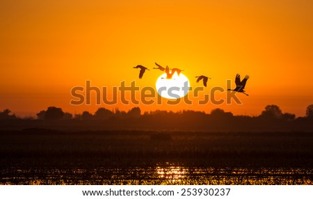 Another new day... - stock photo