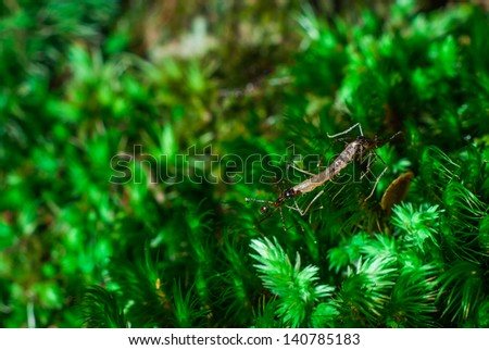 ant in the nature - stock photo