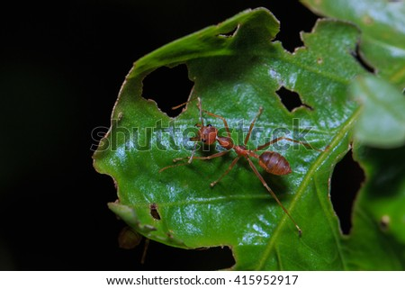 Ant,Insect,ant in nature, insect macro,close up insect. - stock photo