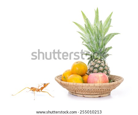 Ant looking some fruit in basket isolated white background. - stock photo