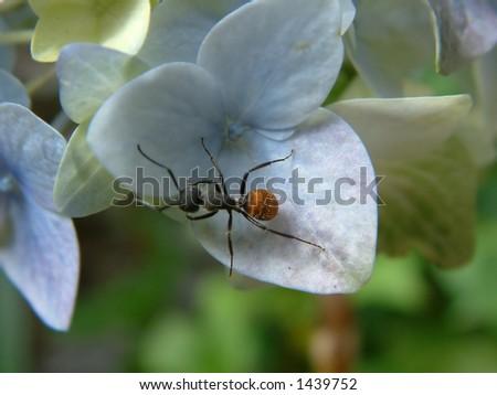 ant of flower - stock photo