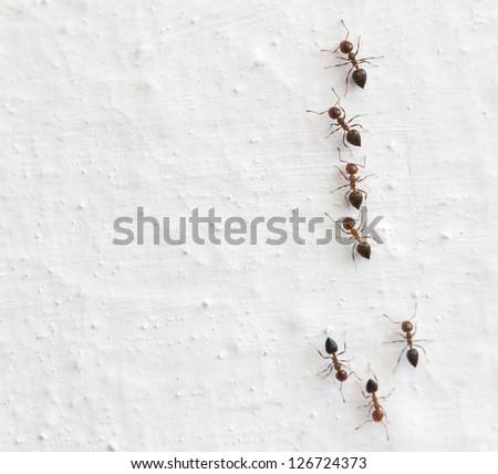 ant on a white background. macro - stock photo