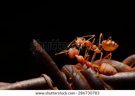 Ant walking on steel wire - stock photo