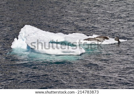 Antarctica - Antarctic Seals - Crabeater Seals Group On An Ice Floe / Antarctica - Seals On An Ice Floe - stock photo