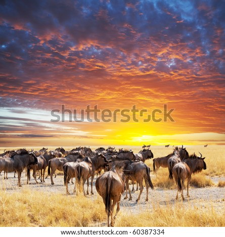 antelope gnu crowd - stock photo