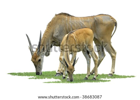 Antelope mother and son - stock photo