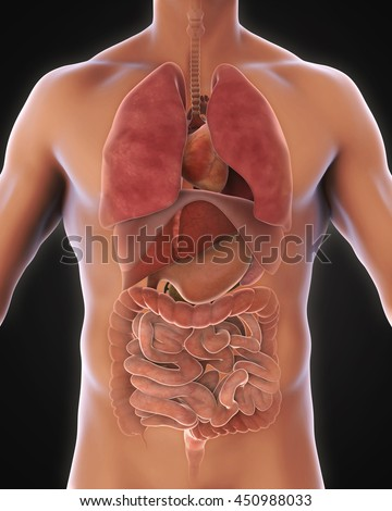Anterior View of Human Body Illustration. 3D rendering - stock photo